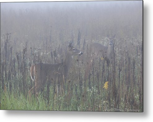 Fawns Metal Print featuring the photograph Fawn At Dawn by Charles Warren