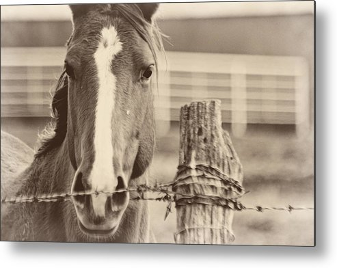 Quarter Metal Print featuring the photograph Fenced by Sean Gillespie