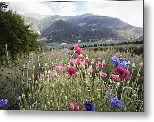 Horizontal Metal Print featuring the photograph Field Of Flowers In Rural Landscape by Stefano Gilera