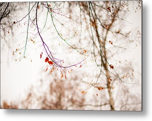 Snow Metal Print featuring the photograph First Snow. Touch Of Gold by Jenny Rainbow