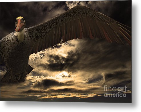 Animal Metal Print featuring the photograph Flight Of The Brown Pelican by Wingsdomain Art and Photography