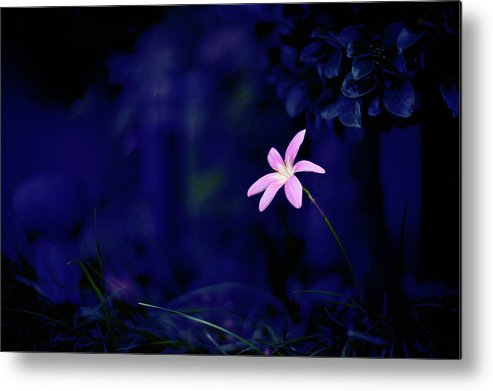 Horizontal Metal Print featuring the photograph Flower by Moaan