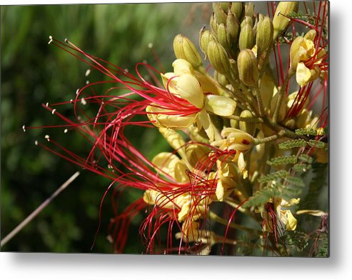 Flowers Metal Print featuring the photograph Flowers In The Wild by Horst Duesterwald