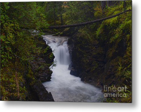 Qualicum Falls Metal Print featuring the photograph Flowing by Diane Smith