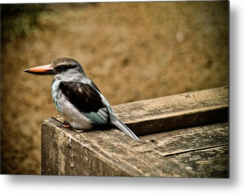 Bird Metal Print featuring the photograph Follow Your Nose by Trish Tritz