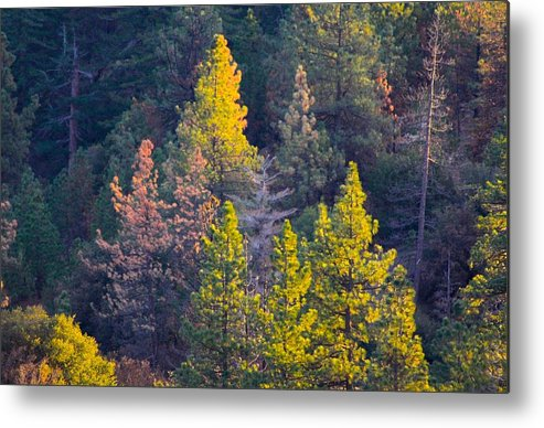 Mountain Metal Print featuring the photograph Forest Foliage by Sarah Vandenbusch