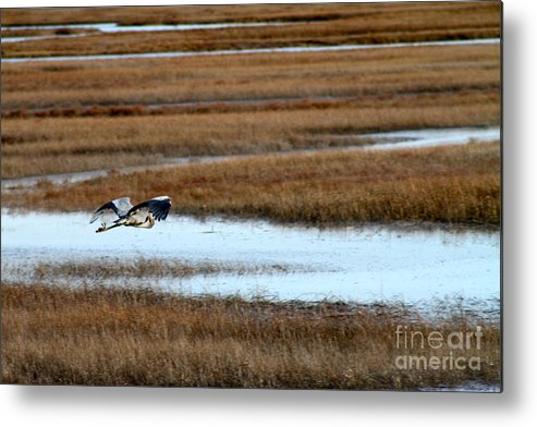 Bird Metal Print featuring the photograph Freedom by Eric Chapman