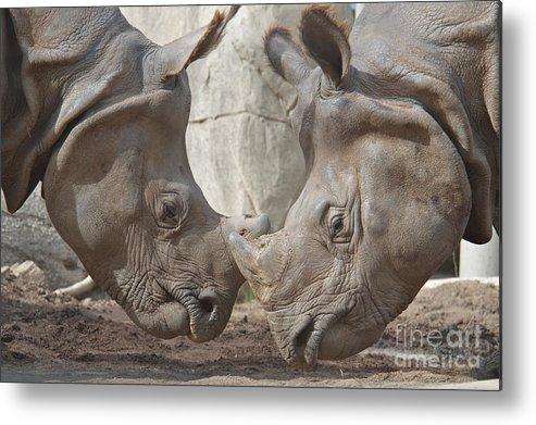 Rhino Metal Print featuring the photograph Friend Or Foe by Jason Waugh