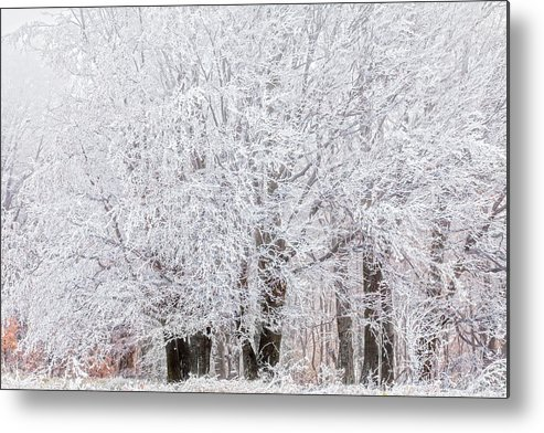 Autumn Metal Print featuring the photograph Frozen Trees by Evgeni Dinev