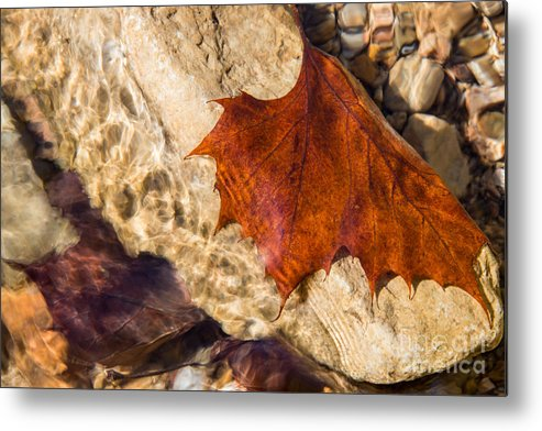 Leaves Metal Print featuring the photograph Gentle Waters by Christina Klausen