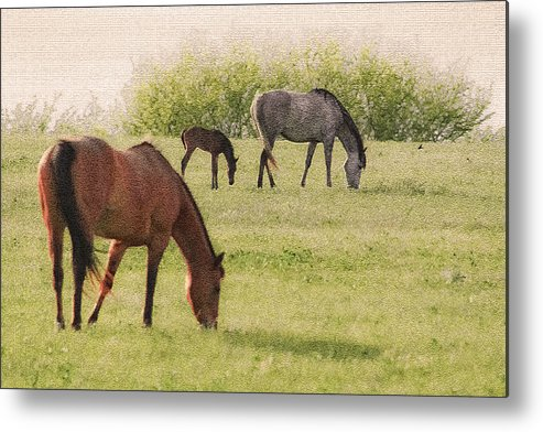 Horses Metal Print featuring the photograph Grazing by Barbara Dean