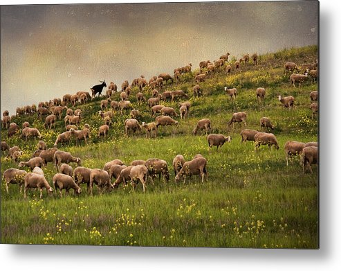 Horizontal Metal Print featuring the photograph Grazing Sheep by Photography by Iñaki Gomez Marin