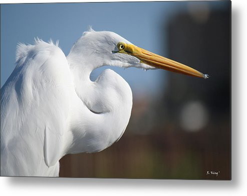 Roena King Metal Print featuring the photograph Great Egret Portrait by Roena King