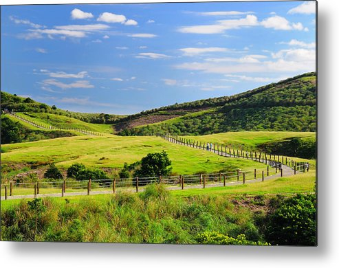 Horizontal Metal Print featuring the photograph Green Grassland by Frank Chen