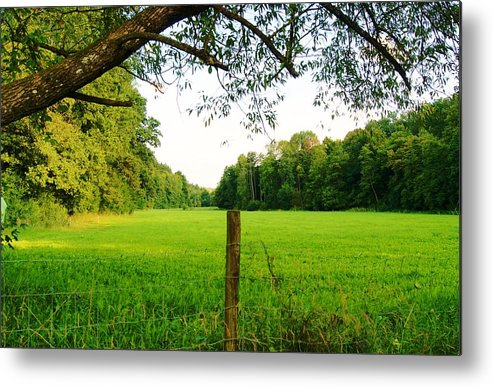 Metal Print featuring the photograph Green Pasture by Cristie Rieland