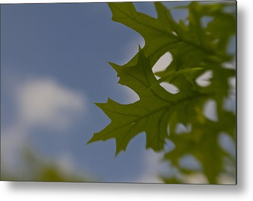 Double Glass Optic Metal Print featuring the photograph Green To Blue by Paul Roach