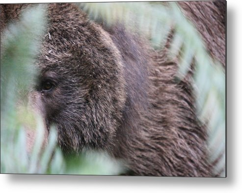 Northwest Trek Metal Print featuring the photograph Grizzley - 0016 by S and S Photo