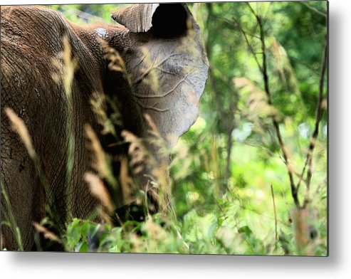 African Elephant Metal Print featuring the photograph Hidden Patterns Blending In by Angela Rath