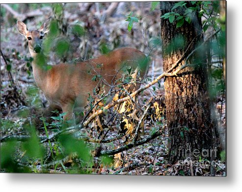 Deer Metal Print featuring the photograph Hiding Out by Kathy White