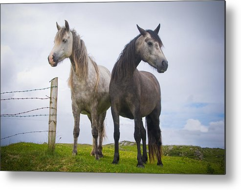 Horizontal Metal Print featuring the photograph Horses by By Ana_gr