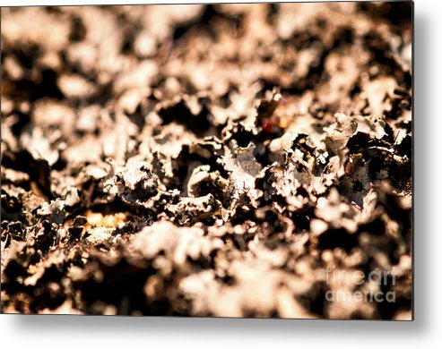 Lychens Metal Print featuring the photograph I Shall Imagine Life by Venura Herath
