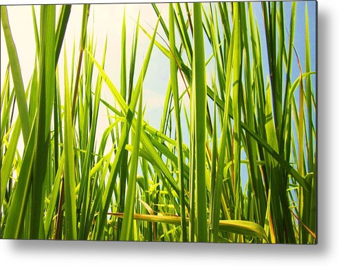 Marsh Metal Print featuring the photograph If I Were A Dragonfly by Charles Jennison