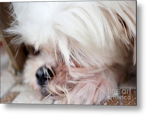 Dogs Metal Print featuring the photograph It Is Better To Rest by Marie Loh
