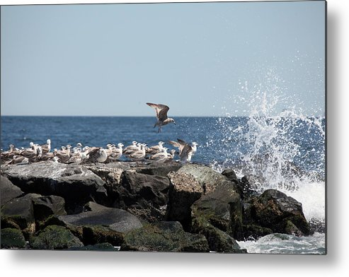 New Jersey Metal Print featuring the photograph Jersy Shore by Joseph G Holland
