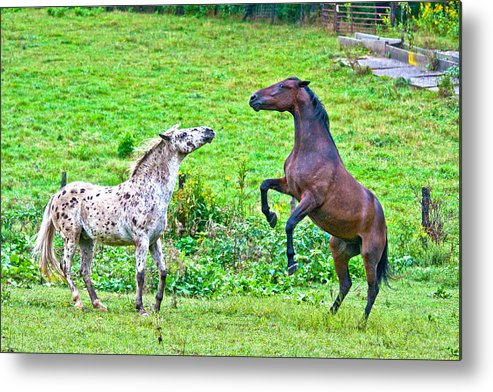Leopard Metal Print featuring the photograph Leopard V Standardbred by Betsy Knapp