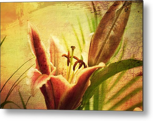 Lilly Metal Print featuring the photograph Lilly by Paul Davis
