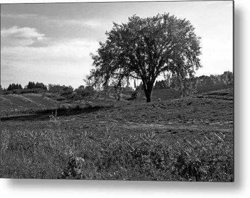 Usa Metal Print featuring the photograph Lone Tree by LeeAnn McLaneGoetz McLaneGoetzStudioLLCcom