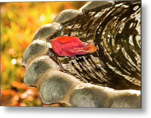 Leaf Metal Print featuring the photograph Lonely Fall by Carolyn Marshall