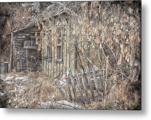Jerry Cordeiro Photographs Framed Prints Metal Print featuring the photograph Lost Dog by The Artist Project