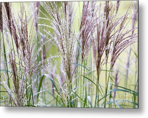 Wind Lost Grass Abstract Storm Green Nature Flower Water Sea Flying Metal Print featuring the photograph Lost In The Wind by Tina Damster