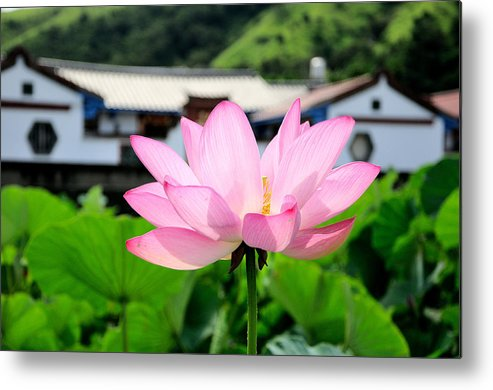 Horizontal Metal Print featuring the photograph Lotus Flower by Michaeliao27