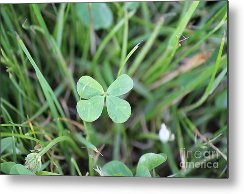 Four Leaf Clover Metal Print featuring the photograph Luck To All by Scenesational Photos