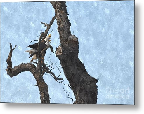 Bald Eagle Metal Print featuring the photograph Mates For Life by Bill Willemsen