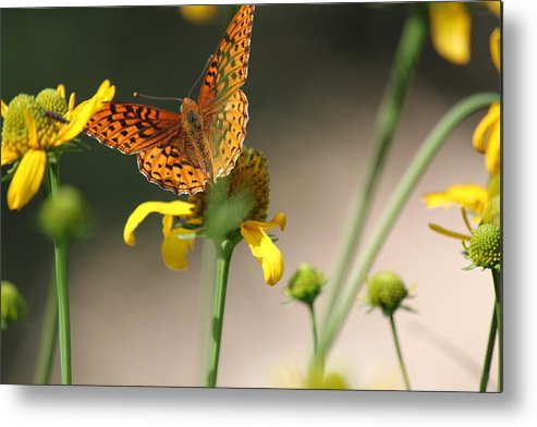 Butterfly Metal Print featuring the photograph Migrating Butterfly Ser1 by Amara Roberts
