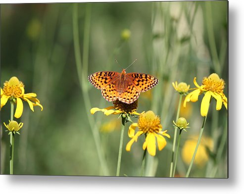 Butterfly Metal Print featuring the photograph Migrating Butterfly Ser2 by Amara Roberts