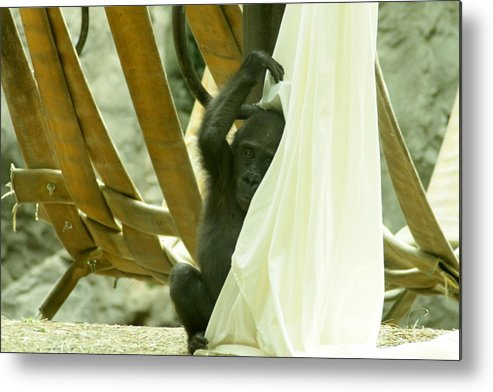 Monkey Metal Print featuring the photograph Monkey Play by Beverly Kobee