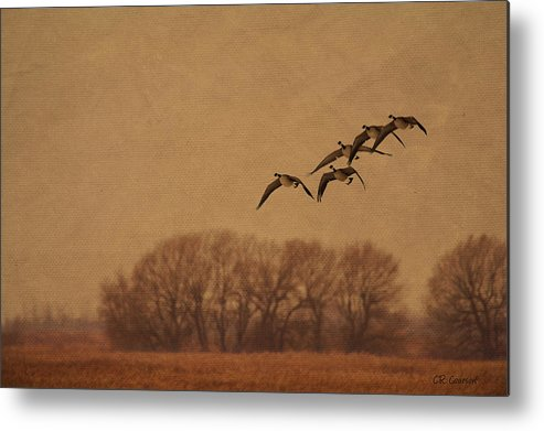 Anatidae Metal Print featuring the photograph Morning Flight by CR Courson