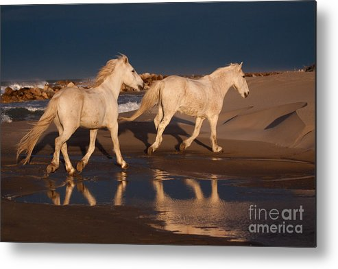 Horse Metal Print featuring the photograph Morning Reflections by Sharon Ely