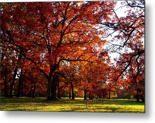 Arboretum Metal Print featuring the photograph Morton Arboretum In Colorful Fall by Paul Ge
