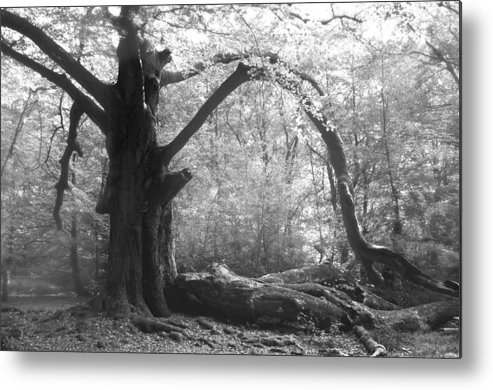 Tree Metal Print featuring the photograph Mystical by Karin Haas