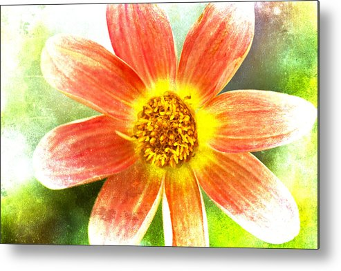 Flower Metal Print featuring the photograph Orange Dahlia On Green by Carol Leigh