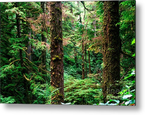 Pacific Rim National Park Metal Print featuring the photograph Pacific Rim National Park 14 by Terry Elniski