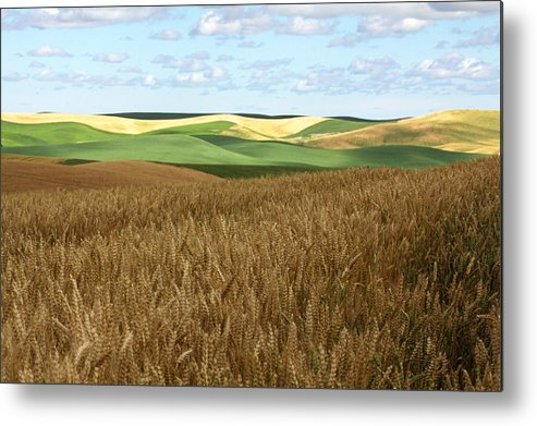 Horizontal Metal Print featuring the photograph Palouse Rolling Hills by Photos by By Deb Alperin