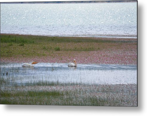 Pelicans Metal Print featuring the photograph Pelican Pair by Linda Larson