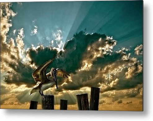 Pelican Metal Print featuring the photograph Pelican Sky by Meirion Matthias