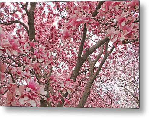 Becky Metal Print featuring the photograph Pink Everywhere by Becky Lodes